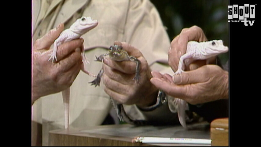 The Johnny Carson Show: Animal Antics With Jim Fowler (1/22/88)