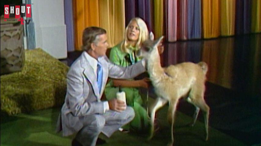 The Johnny Carson Show: Animal Antics With Joan Embery (9/13/74)
