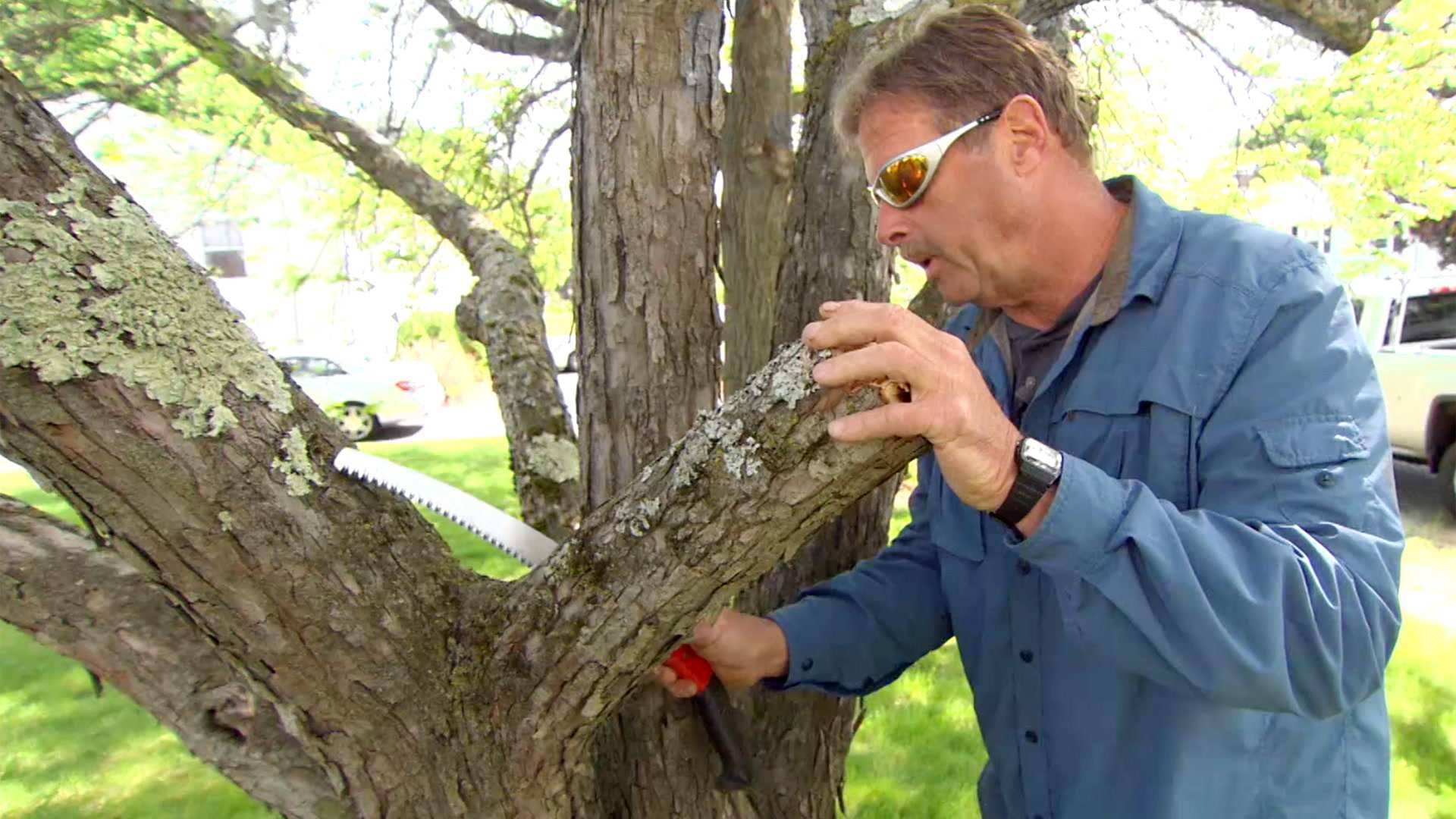 Pruning A Crabapple Tree This Old House