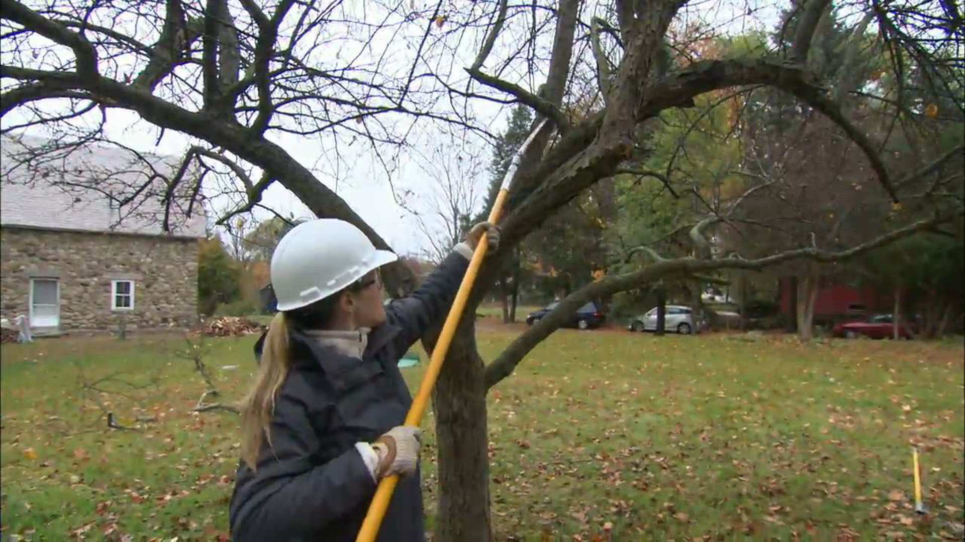 How To Prune A Crabapple Tree This Old House