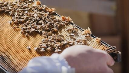Bee-autifully Local Food